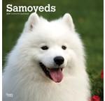 Samoyède Calendriers
