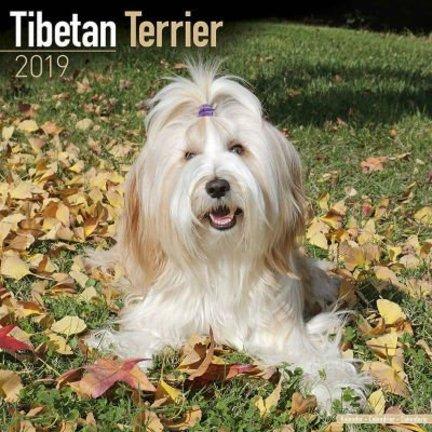 Tibetaanse Terrier Kalenders 2019