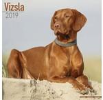 Vizsla Calendars