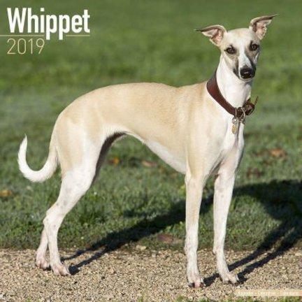 Whippet Calendars