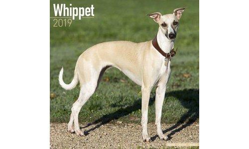 Whippet Kalenders 2019