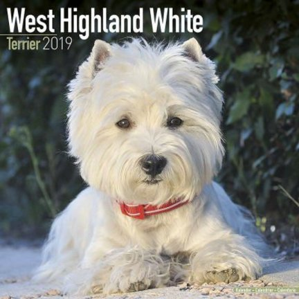 West Highland White Terrier Kalenders 2019