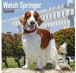 Springer Spaniel Calendriers gallois