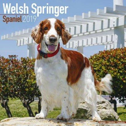 Welsh Springer Spaniel Kalenders 2019