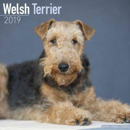 Welsh Terrier Calendars