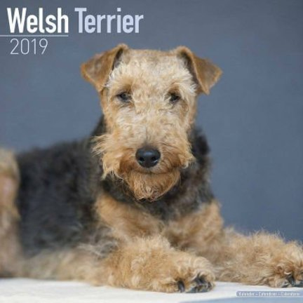 Welsh Terrier Kalenders