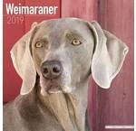 Weimaraner Calendriers