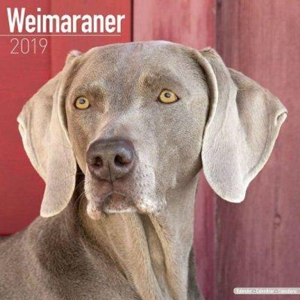 Weimaraner Kalenders