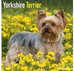 Yorkshire Terrier Calendars