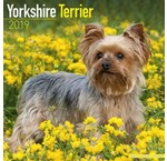 Yorkshire Terrier Calendriers