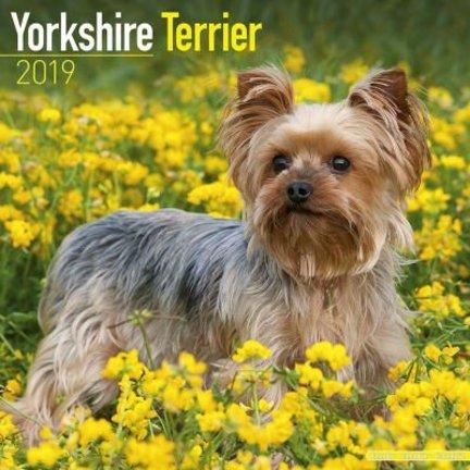 Yorkshire Terrier Kalenders 2019