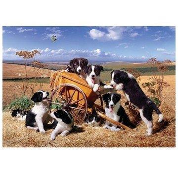 The House of Puzzles Moggies and Doggies Puzzel 1000 Stukjes