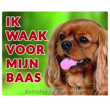 Stickerkoning Cavalier King Charles Spaniel Wake Board - Ruby