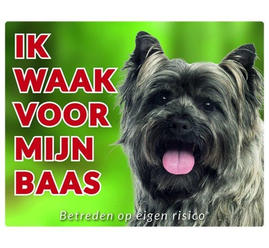 Cairn Terrier Wake board - Je regarde mon patron gris