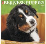 Bernese Moutain Dog Calendars