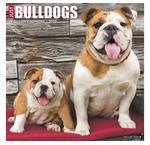 Engelse Bulldog Kalenders