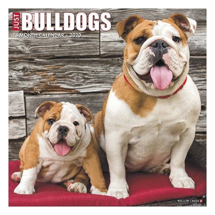 Bulldog Kalender