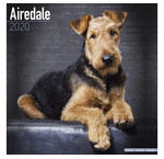 Airedale Terrier Calendars