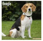 Calendriers Beagle