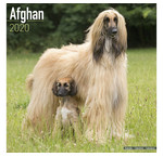 Afghan Hound Calendars