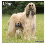 Calendriers de lévrier afghan