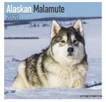 Alaskan Malamute Kalenders