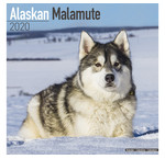Malamute d'Alaska Calendriers