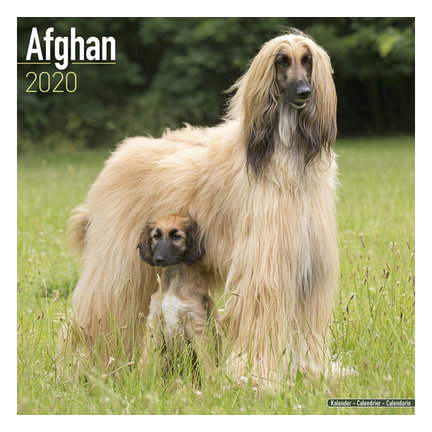 Afghan Hound Calendars 2021