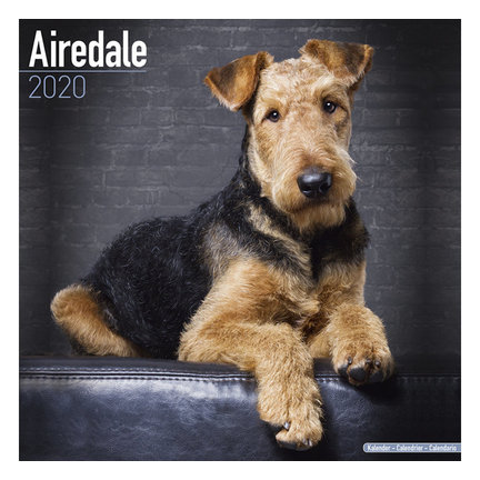 Airedale Terrier Calendars 2021