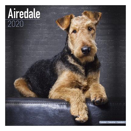 Airedale Terrier Kalenders 2020