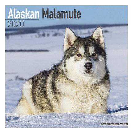 Alaskan Malamute Kalenders 2021