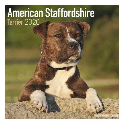 Amerikaanse Staffordshire Terrier Kalenders 2020