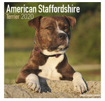 American Staffordshire Terrier Calendars