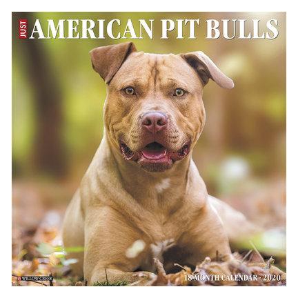 American Pit Bull Terrier Calendars 2021