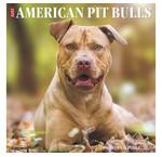 American Pit Bull Terrier Kalenders