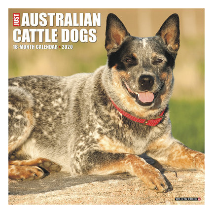 Australian Cattle Dog Calendars 2021