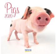 Korsch Verlag Pig Calendar 2020