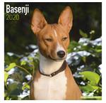 Basenji Calendriers
