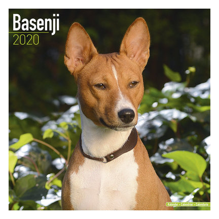 Basenji Kalenders 2020