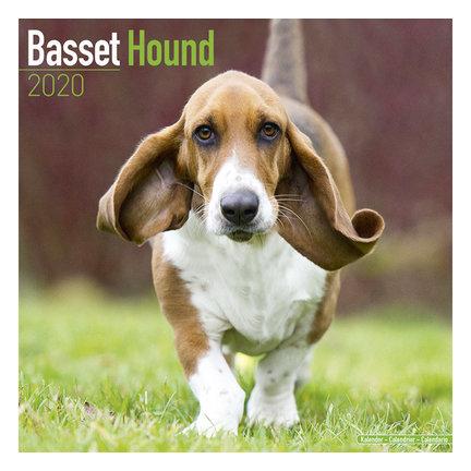 Basset Hound Calendars 2021