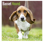 Basset Hound Calendriers
