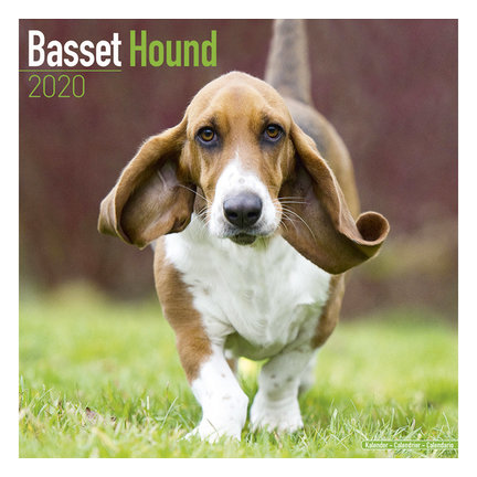 Basset Hound-Kalender