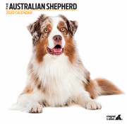 Magnet & Steel Australian Shepherd Calendar 2020