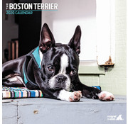 Magnet & Steel Boston Terrier Kalender 2020