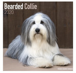 Bearded Collie-Kalender