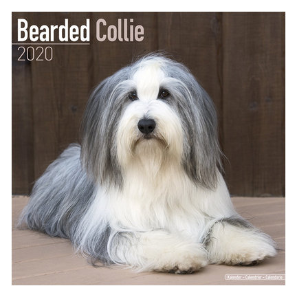 Bearded Collie Calendars 2021