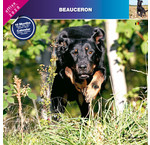 Beauceron Calendriers