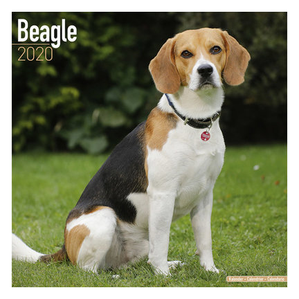 Beagle Kalenders 2021