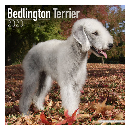 Bedlington Terriers Kalenders 2020