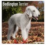 Bedlington Terrier Calendriers